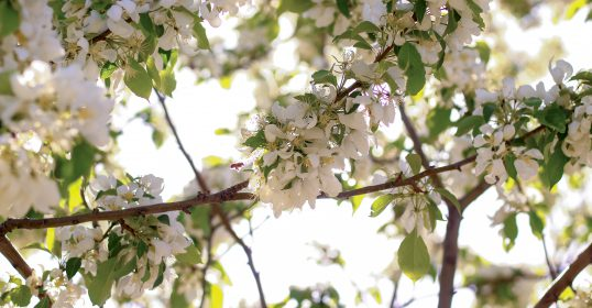 Titelleiste - Frühling