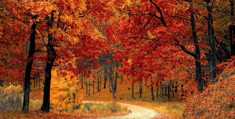 Saison Herbst